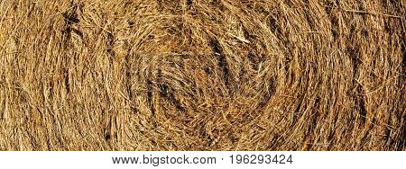 Macro shot on hay ball in summer day. Summer nature background.