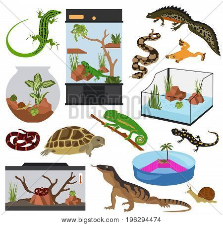 Pets_appliance_reptiles_12