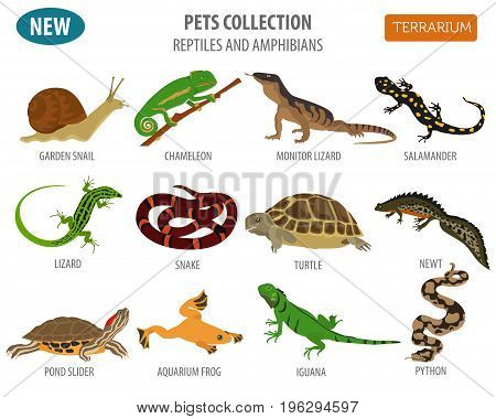 Pets_insects_1