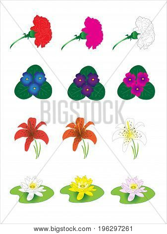 Eabor from four different flowers. Carnation, violet, water-lily water, lily