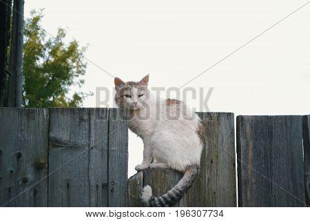 Homeless cat on wooden fence - rural scene, telephoto shot