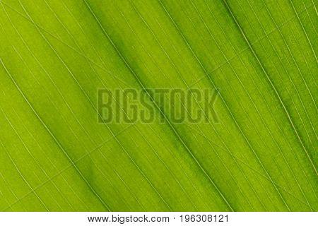 Evergreen closeup green leaf macro closeup texture
