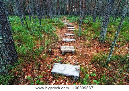 Wooden Pathway In Autumn Forest