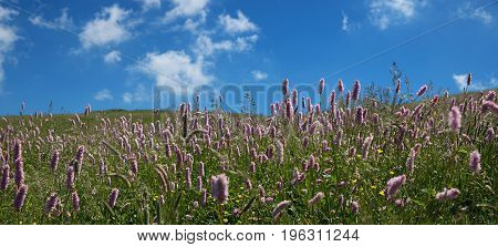 Meadow With Common Bistort At Monte Baldo Mountain Italy