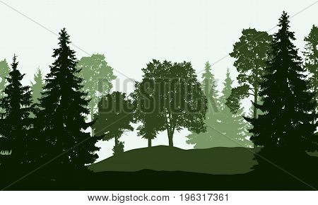 Vector illustration of a deciduous and coniferous forest in several layers isolated on a white background