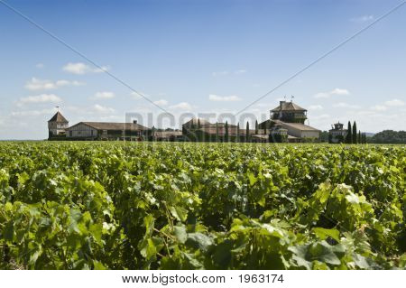 Winery In Bordeaux