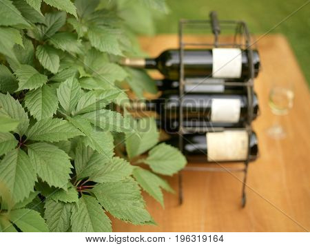 Wild grape leaves in the foreground and a bottle holder in the blurred background. Outdoor cropped photo
