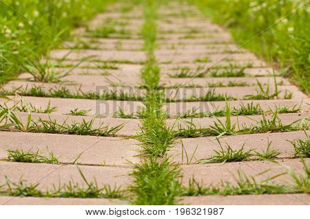 Young Green Grass Growing In Road Of Block Cement Tiles In Park Close Up. Struggle Weeds.