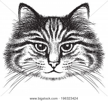 Vector sketch of a long-haired tabby cat's face