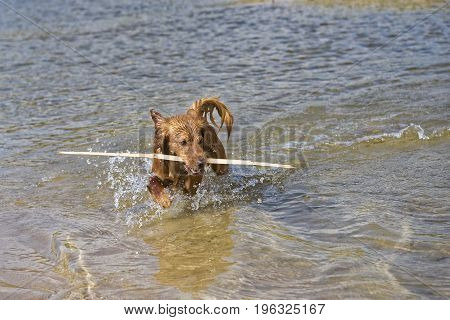 Fantasy dog plays on the beach with sea water.