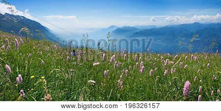 Idyllic Mountain Landscape Monte Baldo With Wildflower Meadow