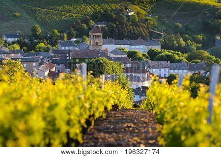 Village Of Beaujolais And Vineyards At Sunrise
