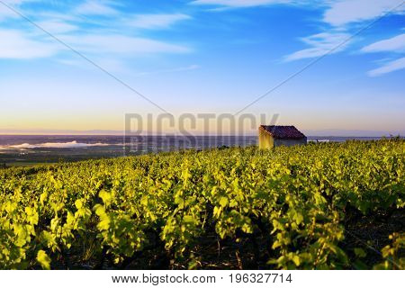 Hut And Vineyards In Beaujolais Land