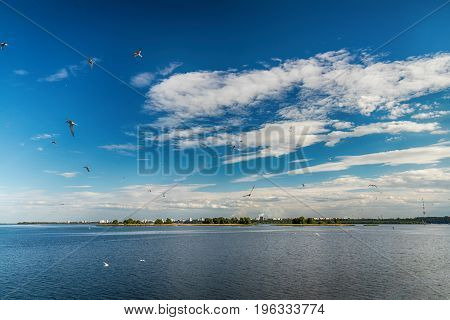 Cityscape and skyline in cloudy sky with gulls on view from river