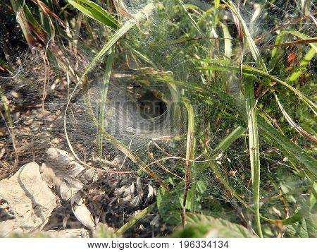 Spider web , Spider net , background ,
