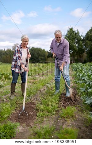 farming, gardening, agriculture and people concept - senior couple with shovels at garden or farm