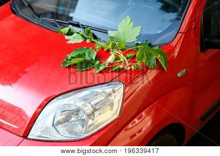 Fallen tree branch on the red car body after a summer spring storm - insurance concept
