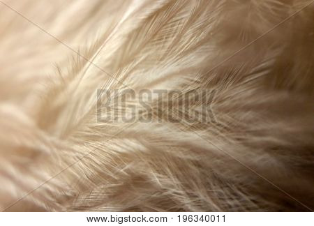 beige feathers up close soft costume owl