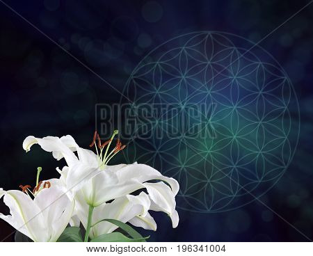 White Lilies and the Flower of Life Symbol Background  -  three white lily heads on left hand side with dark blue and green muted Flower of Life symbol behind with plenty of copy space