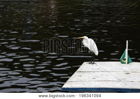 Egret Wait To Fish