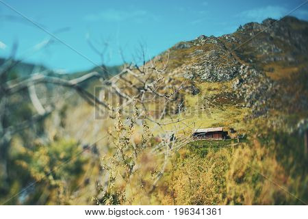 Tilt-shift shooting of: shepherd's hut with with surrounding meadows and pastures bare dry bush or tree in foreground next to wormwood branch mountains in background Altai Russia Kuyus district