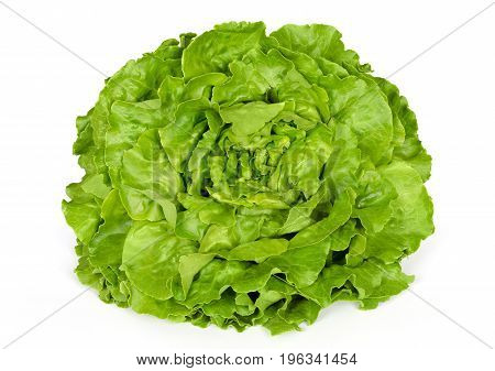 Butterhead lettuce front view. Also Boston or Bibb lettuce. Round lettuce. A green head salad with loose arrangement of leaves. Variety of Lactuca sativa. Closeup photo on white background.