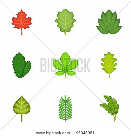 Ripped leaves icons set. Cartoon set of 9 ripped leaves vector icons for web isolated on white background