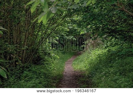 Overview of pathway in the middle of the closed woods, near the town of Frascati, a pleasant and well known place for its fine wines, near Rome. Located in the Lazio region, central Italy