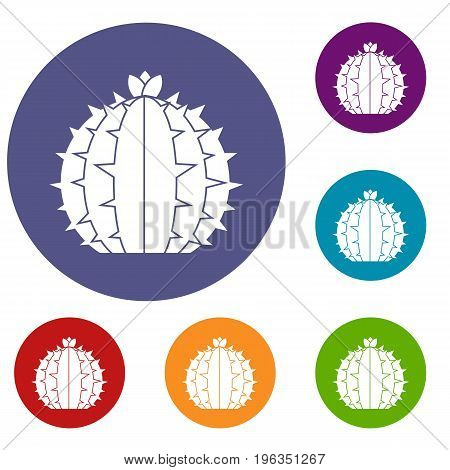 Lophophora cactus icons set in flat circle red, blue and green color for web