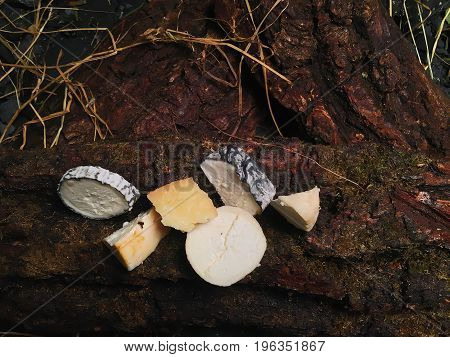 Pieces of cheese lie on large pieces of woody bark. Dried herbal stems lie on the bark of the tree.
