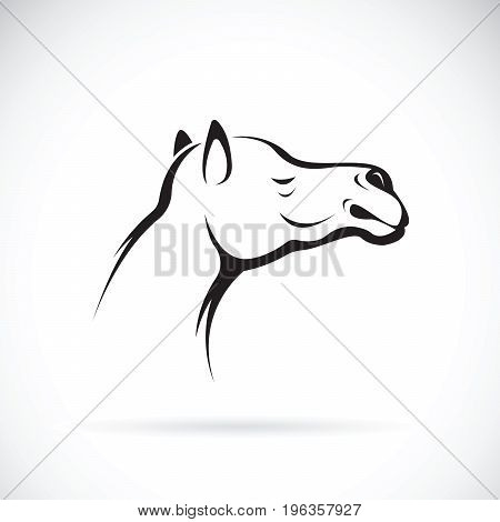 Vector of a camel head on white background Wild Animals.