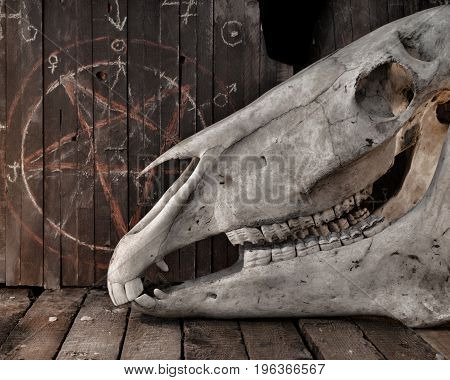 Horse skull with pentagram on planks. Mystic still life with scary occult objects, horror Halloween and black magick concept