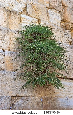fragment of the Western Wall in Jerusalem, one of the holiest sites in the Jewish religious tradition, Israel