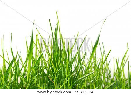 Isolated green grass pattern