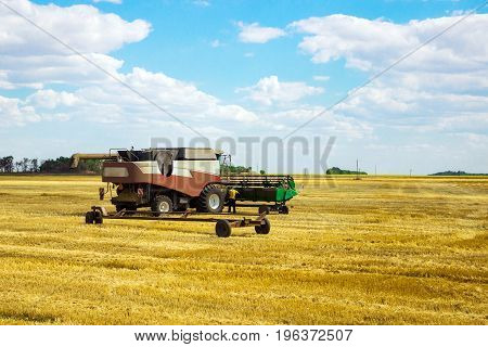 Kombain collects on the wheat crop. Agricultural machinery in the field. Grain harvest.