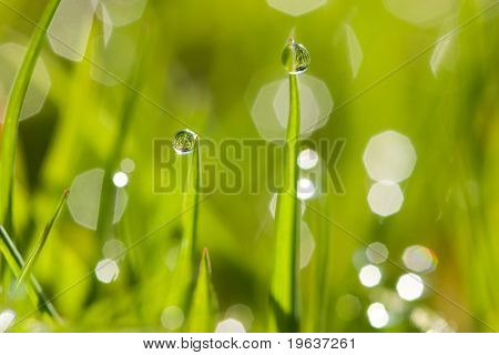 Closeup of morning dew drops on the green grass