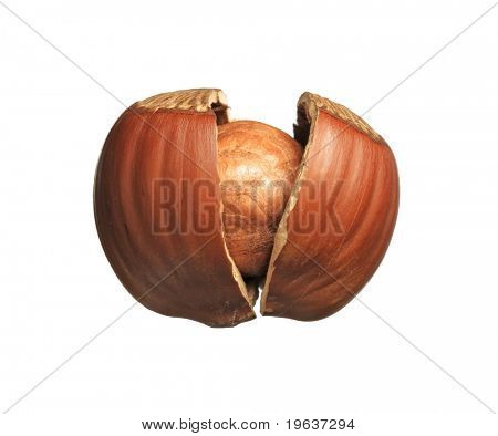 Closeup of cracked hazelnut - isolated on white background.