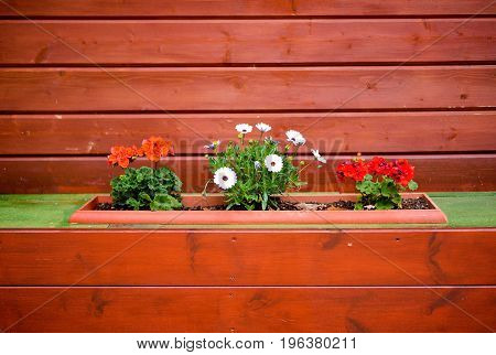 Decorative pot with flowers on wooden painted wall