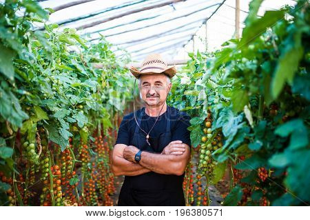 Portrait Of Confident Male Gardener Standing With Arms Crossed At Greenhouse