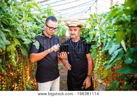 Two Agriculture Farmer Workers Ckecking Orders Of Cherry Tomato Online On Tablet From Costumers In G