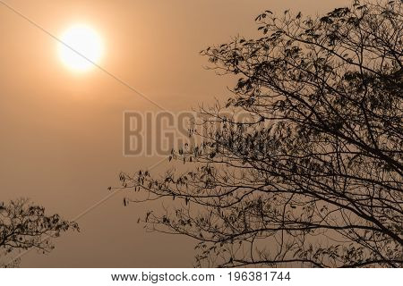 Silhouette of black branches against clear sky at sunset.