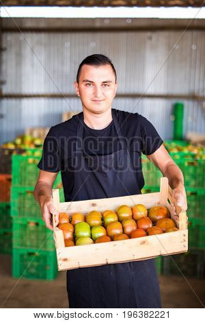 Young Male Farmer Preparing Tomato To Sales On Market In Wooden Boxes In Farm Storage At Greenhouse