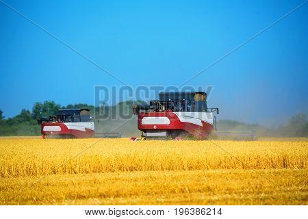 Grain combine harvesters work in wheat field in summer