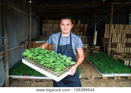 Man Farmer Holding Tray Of Seedlings On The Farm And Smile
