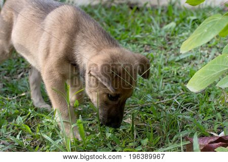 Cute puppy playing in the grass at evening time