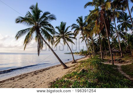 Palm trees on the beach in Tanzania