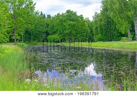 Landscape of the middle-Russian strip. Green grass, deciduous trees, clouds in the sky, a river or a lake