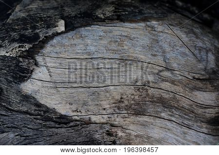 Old wooden surface and bark in black tone.