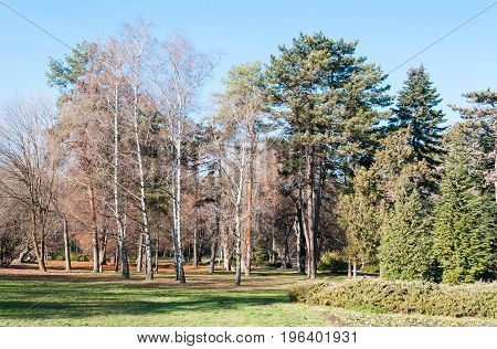 Park with trees and grass in Novi Sad, Serbia.