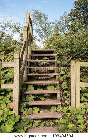 Flight of wooden steps going over a bank covered with plants